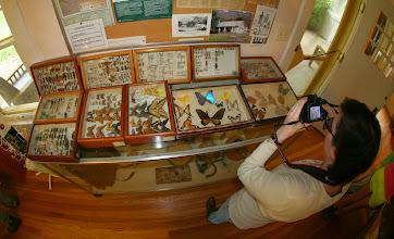 Photo: Insect collection at the Chiricahua headquarters.
