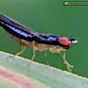 Fly of fern