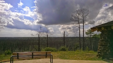 Photo: Overlook, burned pines, Bastrop State Park