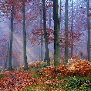 Autumn Woodland-900.jpg