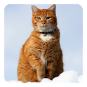 Cat in the Snow Live Wallpaper icon