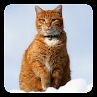 Gato en la nieve Fondo Animado icon