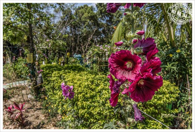 大東溼地公園陶園的花