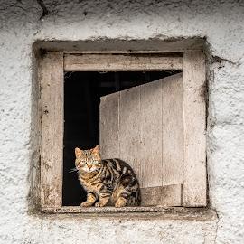 by Vicky's Photography - Animals - Cats Portraits ( kilkenny cat )