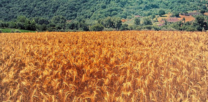 Cum grano salis di francesco_abate