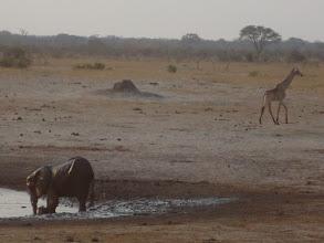 Photo: Mother and baby elephant in the waterhole as giraffe walks away