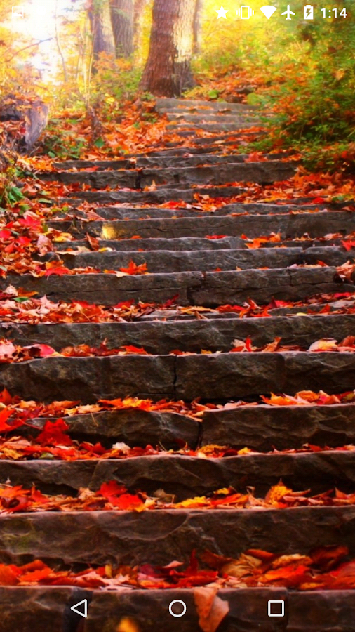 fall leaves live wallpaper 4k android apps on google play