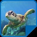 Hermosa Tortuga de Mar Live WP icon