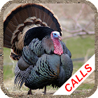 Turkey calls icon