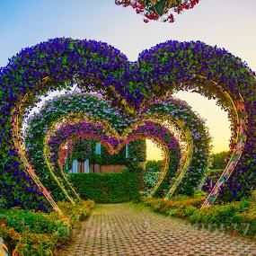 by Abbas Mohammed - Flowers Flower Arangements (  )