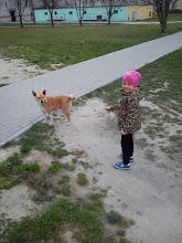 Photo: Wieści z nowego domku Niuni: Witam. Niunia ma się bardzo dobrze. Ładnie chodzi na smyczy :) a w domu jest bardzo grzeczna. Myślę że dobrze jej u nas :)Pozdrawiam