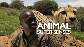 Animal Super Senses thumbnail