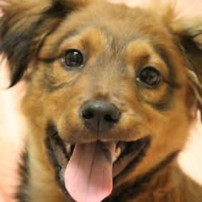 SMILE by Rusty Jhorn - Animals - Dogs Puppies ( love, home, puppies, dogs, happy, puppy, smile, portrait,  )