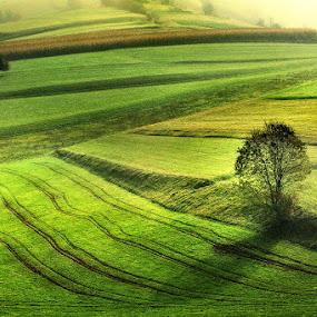 Morning by Jure Kravanja - Landscapes Prairies, Meadows & Fields