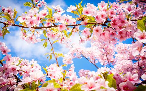 拼圖 - 春暖花開的季節