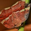 Plant hopper