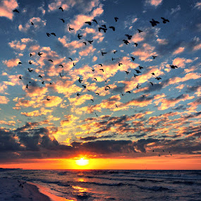 Early birds by Abet Rhupert - Backgrounds Nature ( fort walton, sunsets, florida. travel, seacapes, beach, travel, waterscapes, landscapes )