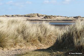 Photo: Ythan Estuary, Newburgh