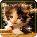 Kittens Voices icon