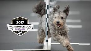 2017 Incredible Dog Challenge thumbnail