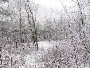 Photo: 05.Pieninki Skrzydlańskie. Szlak na razie jest łatwy i wije się wśród tych niewysokich zarośniętych szczytów.