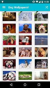 Dog Wallpapers! 5.7 APK Mod Latest Version 1