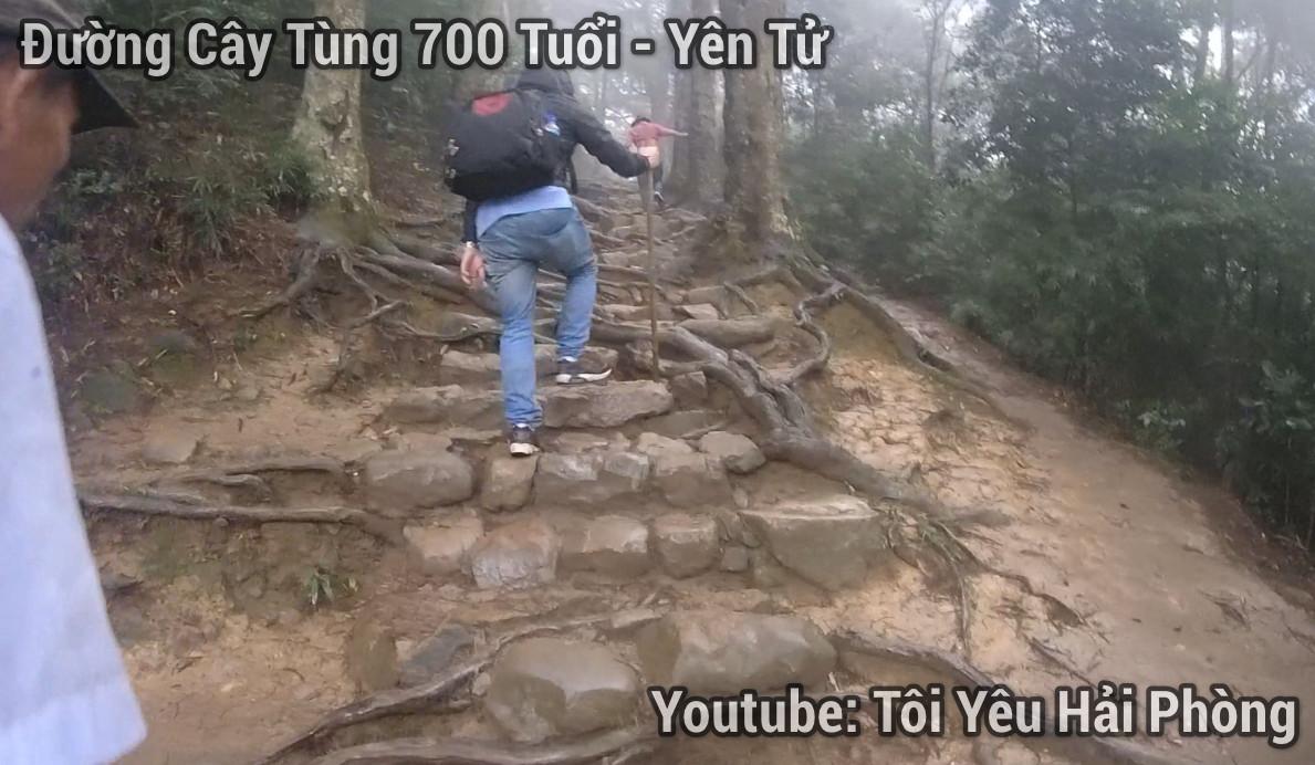 đường cây tùng 700 tuôi núi yên tử 2