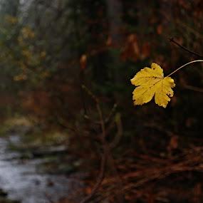 poslední list by Jarka Hk - Nature Up Close Leaves & Grasses ( foliage, forest, czech republic, nature, photo, simplicity )