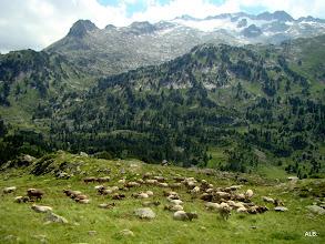 Photo: La ganadería.