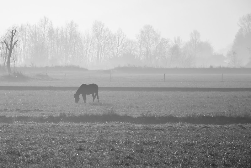 Una fredda mattina di Wilmanna