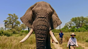 Derrick's Elephant Challenge thumbnail