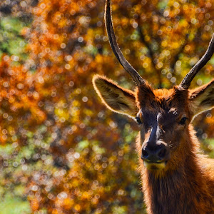 Baby Elk copy.jpeg