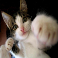 Cute Cat(Look Photo)