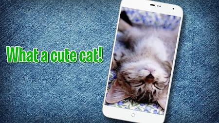 Pat a Kitten 1.0 screenshot 129768