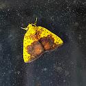 Dry-Leaf Nolid
