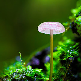 Forest Candy by Tuan Pham - Nature Up Close Mushrooms & Fungi