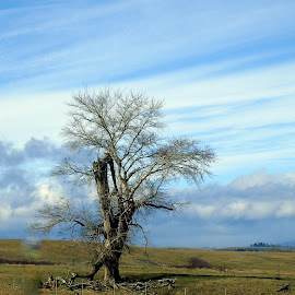 SOLITUDE by Cynthia Dodd - Novices Only Landscapes ( clouds, sky, nature, tree, land, landscape )
