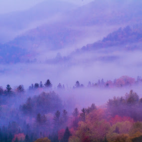 Morning Secret  by Ron Kreml - Landscapes Forests ( trees, forest, sunrise, morning, mist,  )