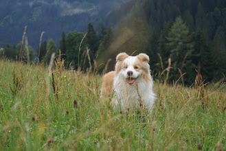 Photo: Ramsau  wandeling, rennen en spelen op de berg Ganim