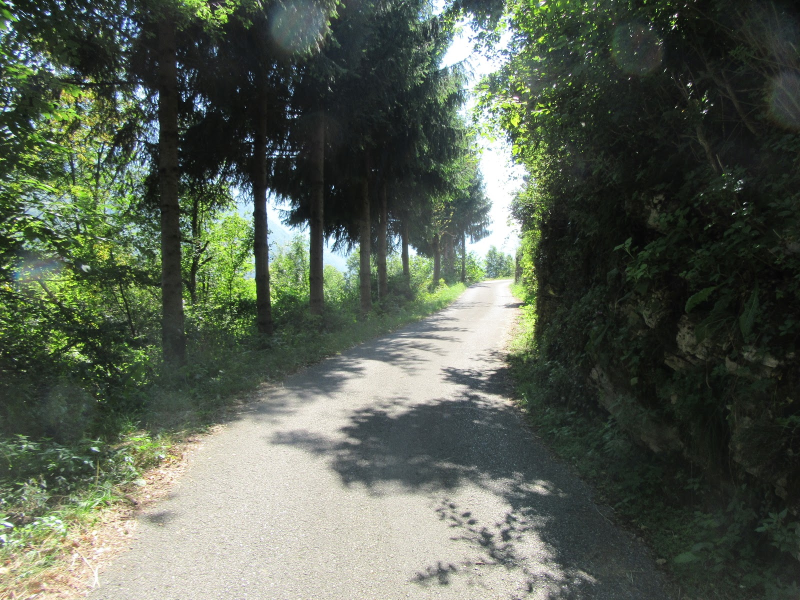 Biking Monte Grappa from Seren - road surrounded by trees