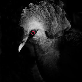 Under the Spotlight by Ibrahim Johan - Animals Birds ( natural light, exotic bird, low light, nikon )