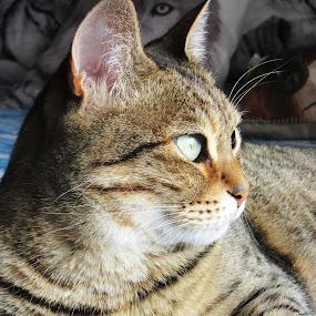 by Catarina Cardoso - Animals - Cats Portraits