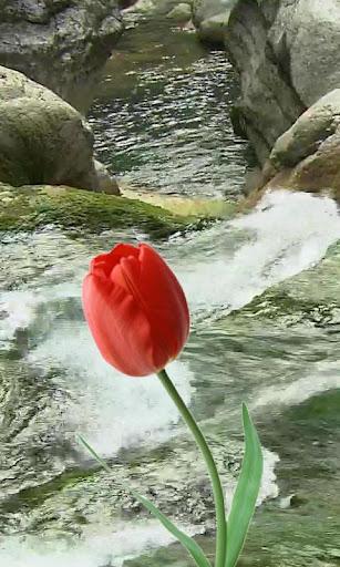 Beautiful tulip and brook