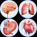 Organs Anatomy Pro. icon