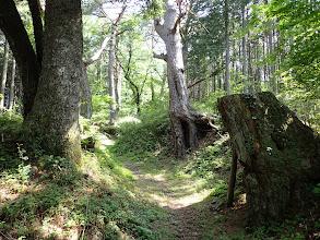 松の巨木が多く