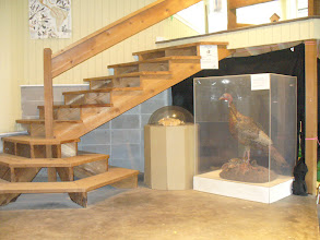 Photo: Stairway and displays at Hodgson Nature Center