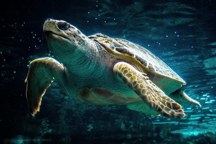 Sea turtle  by Eden Meyer - Animals Sea Creatures ( sea, turtle, animal )