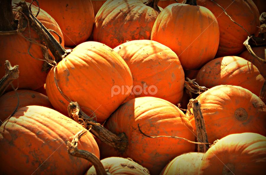 Orange by Becky Holmes - Nature Up Close Gardens & Produce ( autumn, pumpkins, harvest, produce )
