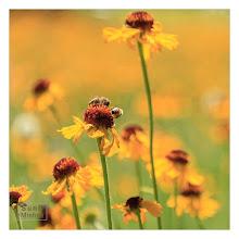Photo: Eastern Sierras-20120717-786