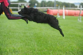 Photo: mudi agility